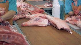 Large slabs of meat are slowly moving along the conveyor belt and butchers are preparing some of them stock video