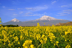 Large and small Ararat in Armenia. Ararat is the highest point of the Armenian Highland. The ancient monastery of Khor Virap visible in the background Royalty Free Stock Images