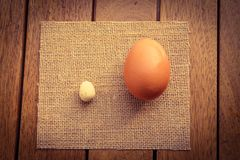 Large and a small egg Stock Photography