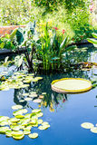 Large and Small Lilly Pads Stock Photo
