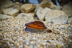 Large and small mussel Stock Images