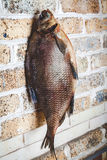 Large smoked fish hanging on brick wall Royalty Free Stock Photography