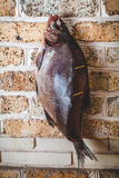 Large smoked fish hanging on brick wall Stock Images