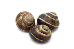 Large snail shell Stock Images