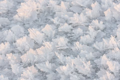 Large snow crystals closeup royalty free stock photos