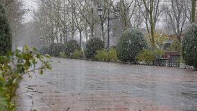 Large snowflakes falling in the park stock video
