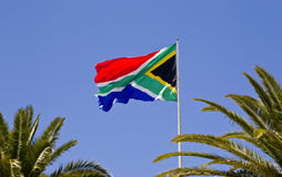 Large South African flag. Moving in a stiff breeze flanked by palm trees royalty free stock photo