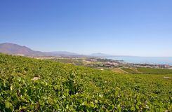 Large Spanish vineyards overlooking Duquesa Manilva through to M Stock Photos