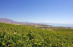 Large Spanish vineyards overlooking Duquesa Manilva through to M. Spanish vineyards overlooking Duquesa Manilva through to Marbella and La Concha mountain stock photos