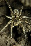 Large spider Stock Images