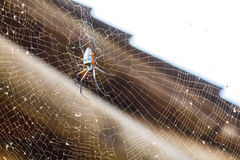 A Large Spider in its web Royalty Free Stock Photo