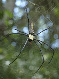Large Spider in the Jungle near the Cambodia-Vietnam border Royalty Free Stock Photos