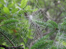 Large Spider's Web. Hanging in a tree in nature Stock Photography