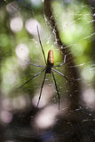 Large Spider In The Web Royalty Free Stock Photos