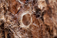 Large Spider Web Royalty Free Stock Photo