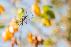 A large spider on the web Royalty Free Stock Images