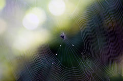Large spiderweb in sunlight Royalty Free Stock Photos