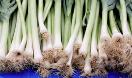 Large spring onions. On outdoor markey stall Royalty Free Stock Photo