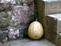 Large Squash Stock Images