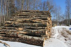Birch Logs in Winter Stock Photo