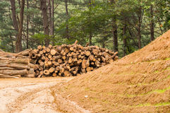 Large stack of cut logs in background Stock Images