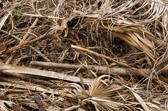 Large stack of dried leaves and twigs. Filling the frame is a large stack of dried, dead leave, palm fronds and twigs Stock Photography