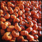 Large stack of orange mini pumpkins Stock Photos