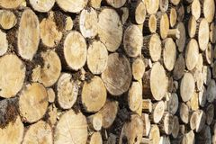 A large stack of pine logs stacked for collection from plantation.  royalty free stock image