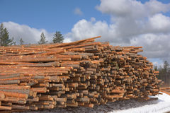 Large stack of pulpwood Royalty Free Stock Photo