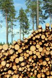 A Large Stack of Wood with Pine Trees Background Stock Photo
