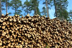 A Large Stack of Wood for Renewable Energy Stock Images