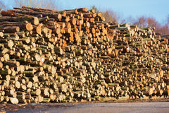 Large stack of wood Royalty Free Stock Photography