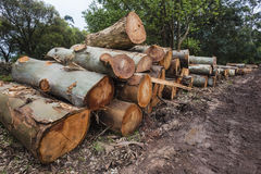 Large Stacked Tree Logs Stock Image