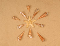 Large Starfish And Seashells On The Sand Royalty Free Stock Photos
