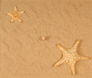 Large Starfish On The Sand Stock Images