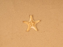 Large starfish on the sand Royalty Free Stock Photography