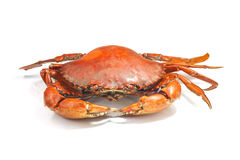 Large steamed crab cooked in red on a white background. Royalty Free Stock Photos