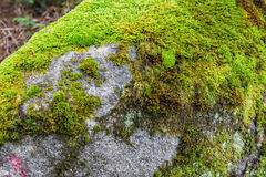 Large stone covered with moss Stock Images