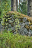 Large stone covered with moss Royalty Free Stock Photo