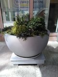 Large stone pot with small shrubs on wooden platform. royalty free stock image