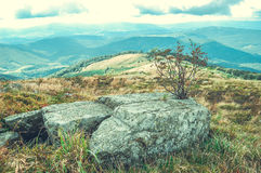 Large stone and a small dry tree in the mountains Royalty Free Stock Photo
