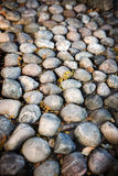 Large stones, autumn leaves Stock Photography