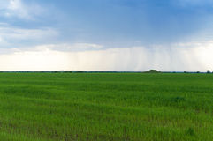 A large storm cloud over a wide green agricultural field. In the distance it rains. Stock Image