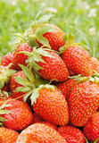 Large strawberries Royalty Free Stock Photo