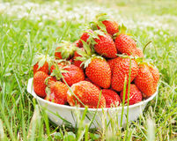 Large strawberries on the green grass Stock Images