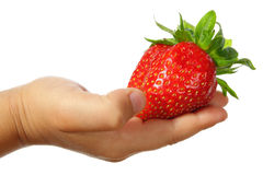 Large strawberry Royalty Free Stock Photography