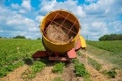 Large strawberry field Stock Photo