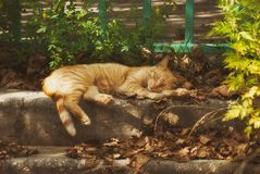 A large street ginger cat sleeping on the steps under the sun`s rays.  Royalty Free Stock Photos