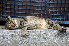 A gray striped cat sleeps on a stone floor near a fence with a lattice Royalty Free Stock Photo