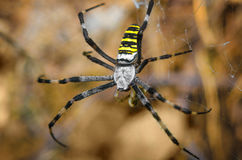 Large striped spider. Shot close-up on a background of nature Stock Images